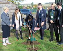 Tree planting Nov2018 1