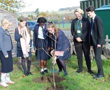 Tree planting Nov2018 2