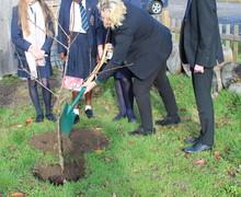 Tree planting Nov2018 3