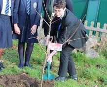 Tree planting Nov2018 4