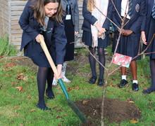 Tree planting Nov2018 5