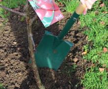 Tree planting Nov2018 6